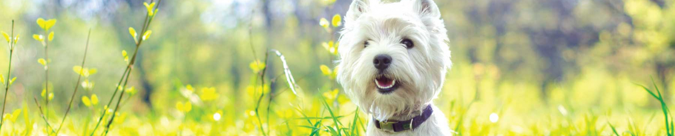 Blog post: Why dogs & cats eat grass - primary image