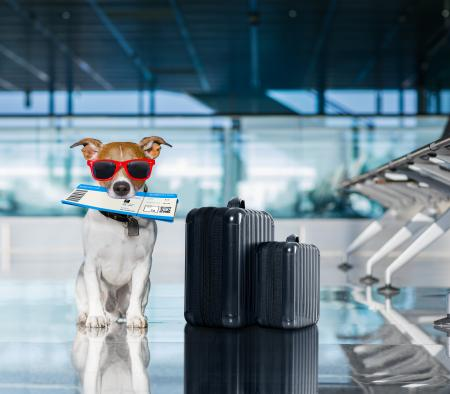 Travel with Your Dog: Part Two - Ways to Get There - primary image