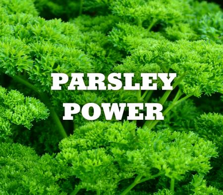 Parsley - Superfood for Dogs - primary image