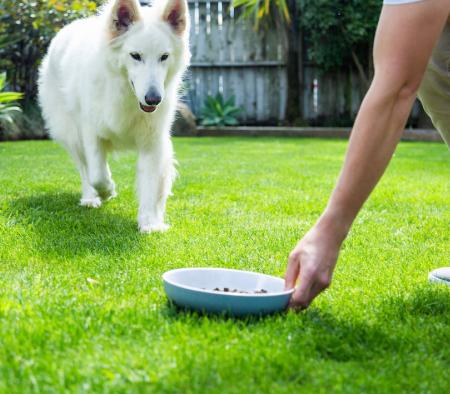 The best dog food for weight loss? It's been around for centuries  - primary image