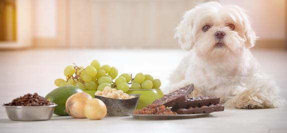 List of 10 Common Household Pet Toxins - primary image