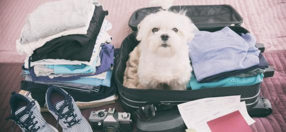 Travel with Your Dog: Part Three - What to Pack - primary image
