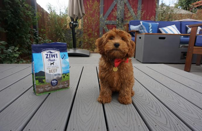 New Pup Training Tips by Certified Professional Trainer, Nicole Ellis - primary image