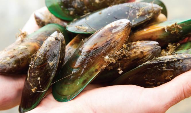 Blog post: Green Mussels - primary image