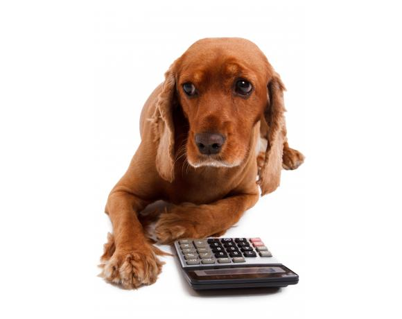 Feeding calculator ziwi pets this calculator uses latest nutritional data and may differ slightly from pack guidelines forumfinder Choice Image