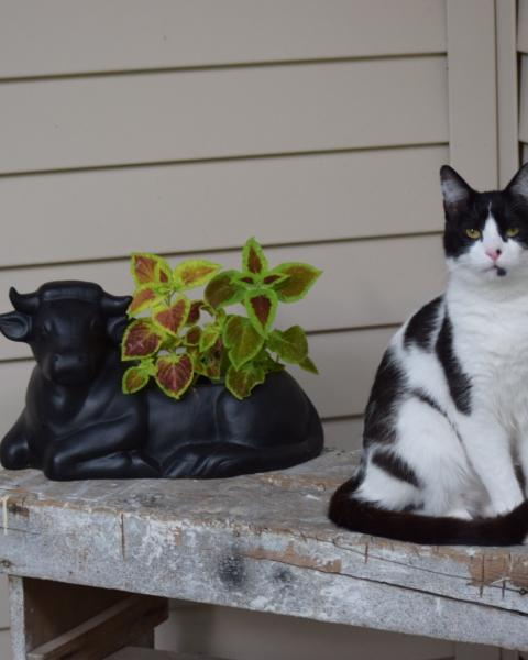 Is Your Cat a Finicky Eater? by The Conscious Cat - primary image